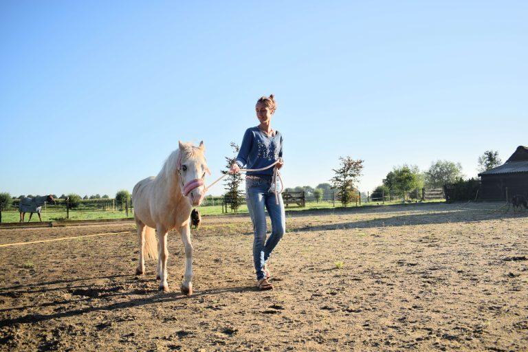 Haussitting - Pferdsitting
