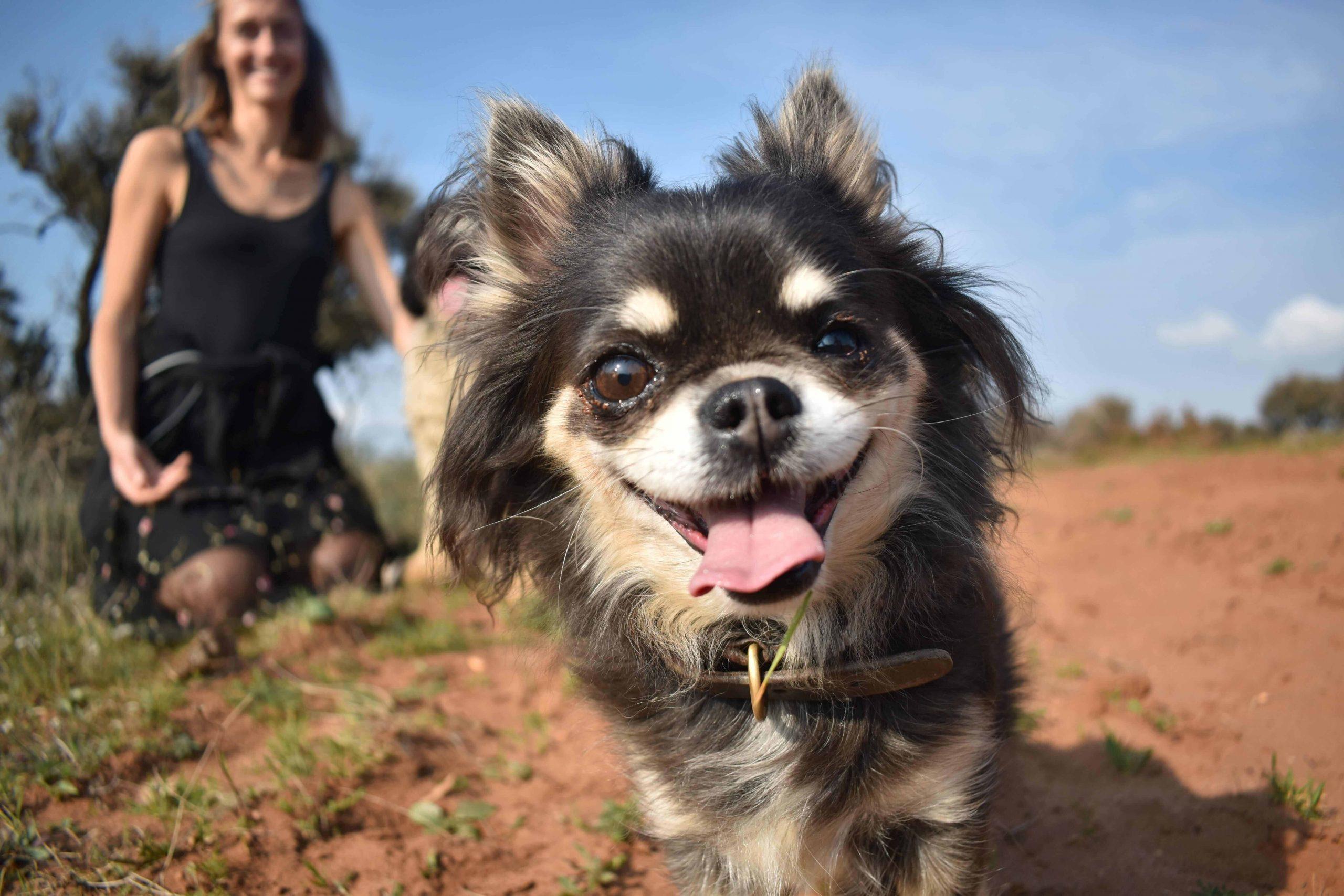 Tierbetreuung zu Hause oder Tierheim? | PerfekteTiersitter™